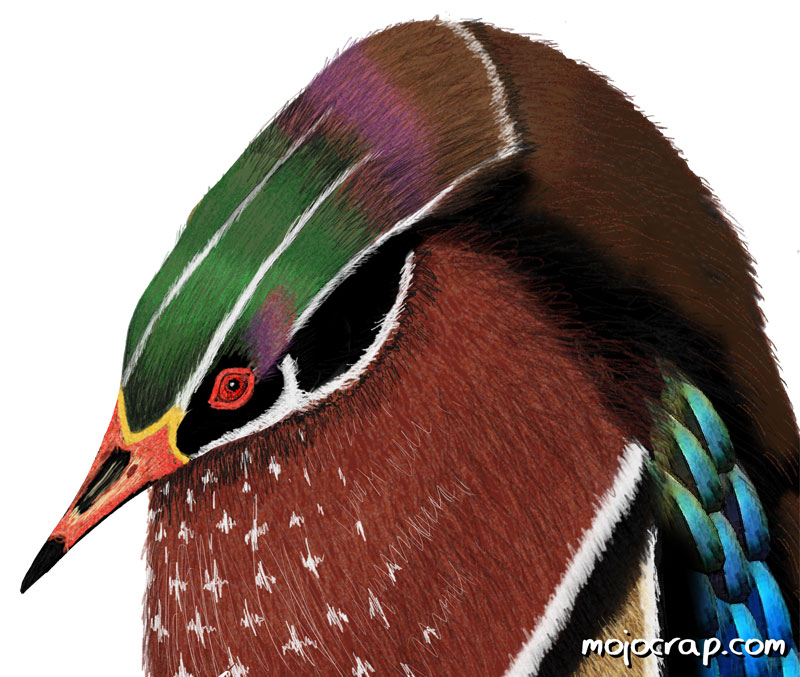 Wood duck penguin